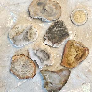 Fette di Legno fossile
